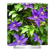 Purple Rush Shower Curtain