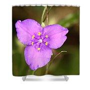 Purple Spiderwort Wildflower Shower Curtain