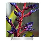 Purple Spike Bromeliad Shower Curtain