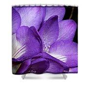 Purple Springtime Shower Curtain