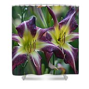 Purple Stargazers Shower Curtain