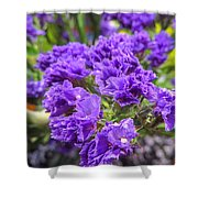 Purple Statice Flower Arrangement Shower Curtain