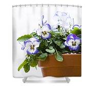 Purple Swirl Violas Shower Curtain