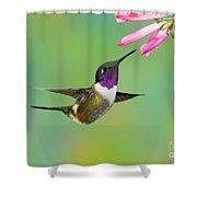 Purple-throated Woodstar Shower Curtain