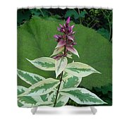 Purple Tipped Flower Shower Curtain
