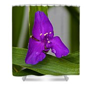 Purple Triangle Shower Curtain