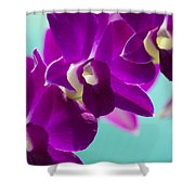 Purple Trio - Orchids Shower Curtain