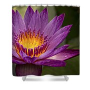 Purple Tropical Water Lily Shower Curtain