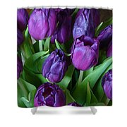 Purple Tulips Shower Curtain