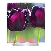 Purple Tulips Shower Curtain by Heiko Koehrer-Wagner