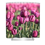 Purple Tulip Standouts Shower Curtain