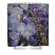 Purple Vine Shower Curtain