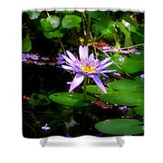 Purple Water Lilly Shower Curtain