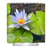 Purple Water Lily In Pond. Shower Curtain