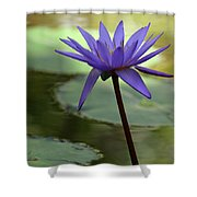 Purple Water Lily In The Shade Shower Curtain
