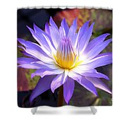 Purple Waterlily With Fall Lilypads Shower Curtain