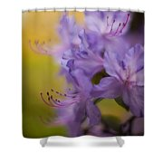 Purple Whispers Shower Curtain by Mike Reid