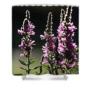 Purple Wild Flowers - 1 Shower Curtain