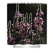 Purple Wild Flowers - 2 Shower Curtain