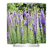 Purple Wild Flowers 2 Shower Curtain