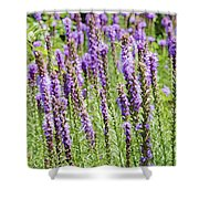 Purple Wild Flowers3 Shower Curtain