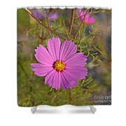 Purple Wildflower Shower Curtain