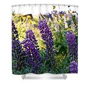 Purple Wildlfowers Shower Curtain