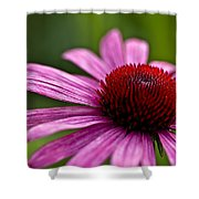 Purples And Reds Shower Curtain