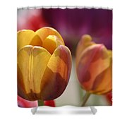 Purpleyellowtulips7016 Shower Curtain