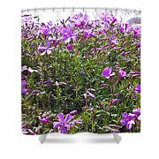 Puryple Shower Curtain