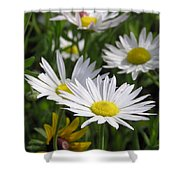 Pushing Up Daisies Shower Curtain