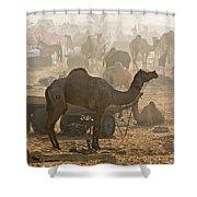 Pushkar Camel Fair - India Shower Curtain