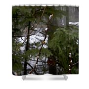 Pussy Willow In The Pines Shower Curtain