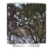 Pussy Willow In The Rain Shower Curtain