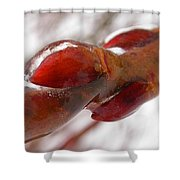 Pussy Willow Preserved Shower Curtain