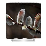 Pussy Willows Shower Curtain by John Haldane