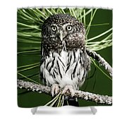 Pygmy Owl Shower Curtain