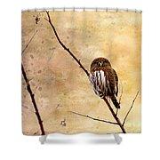 Pygmy Owl - The Watcher Shower Curtain