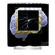 Pyramidal Neuron And Brain Shower Curtain
