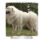 Pyrenean Mountain Dog Shower Curtain