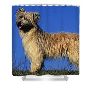 Pyrenean Sheepdog Shower Curtain