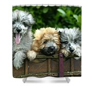 Pyrenean Sheepdogs Shower Curtain