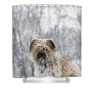 Pyrenean Shepherd Dog Shower Curtain