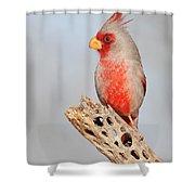Pyrrhuloxia On Cholla Rib Shower Curtain