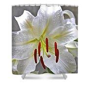 Qcpg 13-001 Shower Curtain