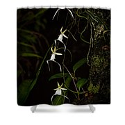 Quad Ghost Orchid Shower Curtain