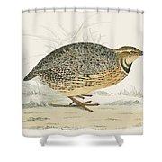 Quail Shower Curtain