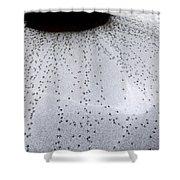 Quail Tracks Shower Curtain