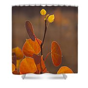 Quaking Aspen In Color   #3749 Shower Curtain