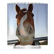 Quarter Horse Portrait Nosing Around Shower Curtain